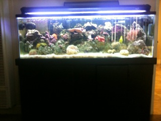 60 gallon salt water fish tank with black stand for 60 gallon fish tank