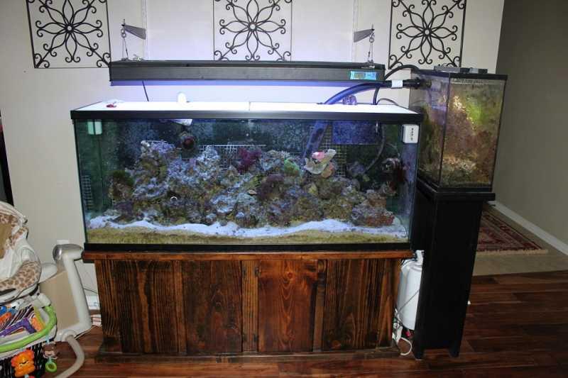 100gal Saltwater Fish Tank Stand Refugium Skimmer